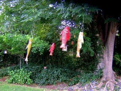 Fish windsocks hanging from a tree