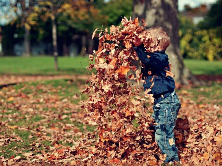 Boy playing in a pile of leaves